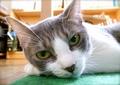 necobitter『日めくり猫ら』まとめ 2011年8月分agfa_sensor830s_7