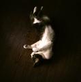 necobitter『日めくり猫ら』まとめ 2011年8月分dianamini