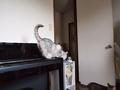 necobitter『日めくり猫ら』まとめ 2011年8月分olympus_e-520_1