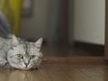 necobitter『日めくり猫ら』まとめ 2011年8月分olympus_e-520_2