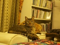 necobitter『日めくり猫ら』まとめ 2011年8月分olympus_e-520_4
