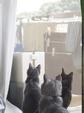 necobitter『日めくり猫ら』まとめ 2011年8月分olympus_e-520_7
