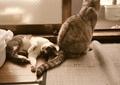 necobitter『日めくり猫ら』まとめ 2011年8月分klasse_s_1
