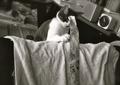 necobitter『日めくり猫ら』まとめ 2011年8月分klasse_s_2