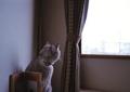 necobitter『日めくり猫ら』まとめ 2011年8月分klasse_s_4