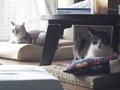 necobitter『日めくり猫ら』まとめ 2011年8月分olympus_e-520_9