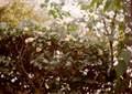 LOMO 135M『にじむ紅葉 2010 その1』1