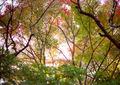 LOMO 135M『にじむ紅葉 2010 その1』3