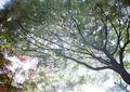 LOMO 135M『にじむ紅葉 2010 その1』6