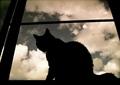 日めくり猫ら番外編・その他らくがき写真まとめ 2011年8月分1
