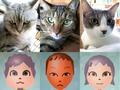 日めくり猫ら番外編・その他らくがき写真まとめ 2011年8月分3