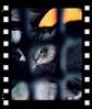 日めくり猫ら番外編・その他らくがき写真まとめ 2011年8月分6