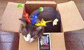 necobitterの猫ら写真まとめ 2011.09_nintendo_3ds