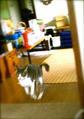 necobitterの猫ら写真まとめ 2011.09_agfa_830s