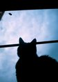 necobitterの猫ら写真まとめ 2011.09_polaroid_a520