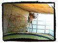 necobitterの猫ら写真まとめ 2011.09_ipod_touch