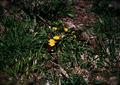 KLASSE S『きらりんと花、つやっと葉(大室山その2)』1