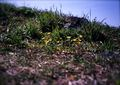 KLASSE S『きらりんと花、つやっと葉(大室山その2)』3