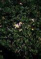 KLASSE S『きらりんと花、つやっと葉(大室山その2)』5