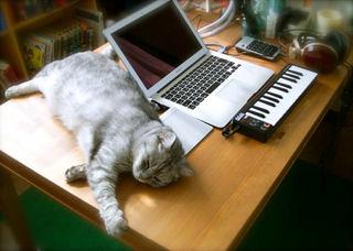 猫がパソコンに乗らず、飼い主はもふもふできる机。1