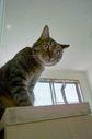 necobitterの猫ら写真まとめ 2011.09_sigma_dp1