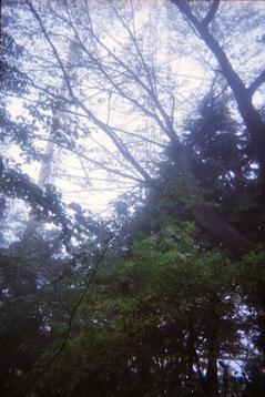 陣馬山-景信山8