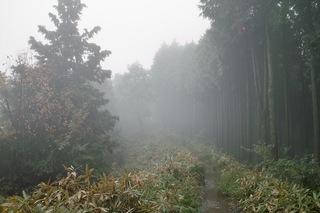 陣馬山-景信山1