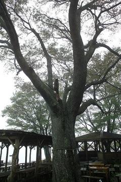 陣馬山-景信山3