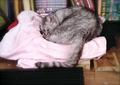 necobitterの猫ら写真まとめ 2011.10_1_Polaroid_izone550