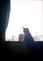 necobitterの猫ら写真まとめ 2011.10_2_Polaroid_a520