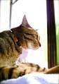 necobitterの猫ら写真まとめ 2011.10_3_AGFA830s