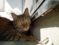 necobitterの猫ら写真まとめ 2011.10_5_SIGMA_DP1