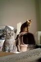necobitterの猫ら写真まとめ 2011.11_SIGMA DP1