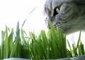 necobitterの猫ら写真まとめ 2011.11_AGFA 830s-1