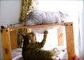 necobitterの猫ら写真まとめ 2011.11AGFA 830s-2