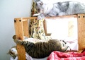 necobitterの猫ら写真まとめ 2011.11AGFA 830s-3