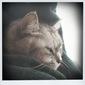 necobitterの猫ら写真まとめ 2011.11_iPod touch