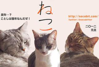 謹賀新年!ことしは猫年なんだぜ!!