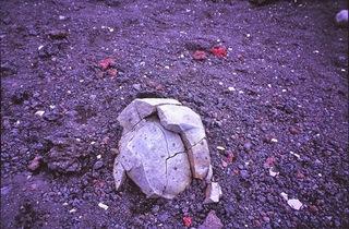 富士山岩等7
