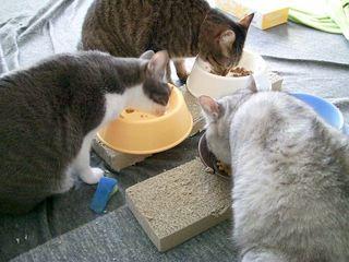 猫の餌台(ごはん台)を作る...までもなかった!1