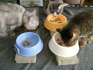 猫の餌台(ごはん台)を作る...までもなかった!2