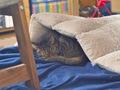 necobitterの猫ら写真まとめ 2011.12_1_e-520