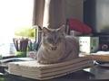 necobitterの猫ら写真まとめ 2011.12_2_e-520