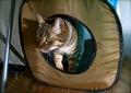 necobitterの猫ら写真まとめ 2011.12_3_agfa830s