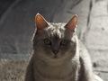 necobitterの猫ら写真まとめ 2011.12_4_e-520