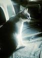 necobitterの猫ら写真まとめ 2011.12_6_ipodtouch