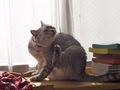 necobitterの猫ら写真まとめ 2011.12_7_e-520