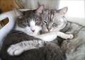 necobitterの猫ら写真まとめ 2012.01_AGFA830s