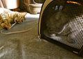 necobitterの猫ら写真まとめ 2012.01_P300