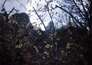 SMENA 8M『梅まつり2011 その1』1